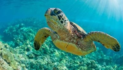 Drone grava mais de 64.000 tartarugas na Grande Barreira de Coral na Austrália