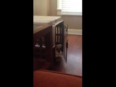 O cachorro mais preguiçoso do mundo