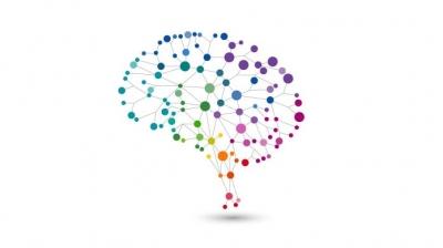 Cientistas criam atlas colorido do cérebro