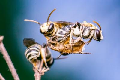 Veja como abelhas demonstram carinho nesse vídeo