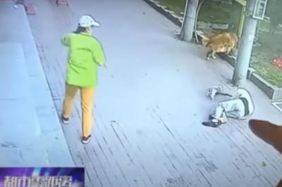 Gato cai de prédio, atinge idoso e briga com seu cão