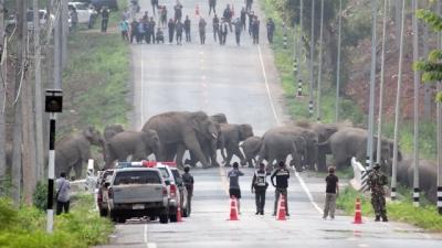 Família de 50 elefantes param uma rua inteira