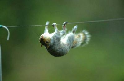 O esquilo que realmente queria suas nozes