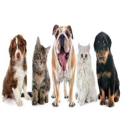 Câncer em animais: quais as raças mais vulneráveis, sintomas e tratamentos