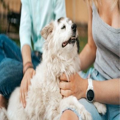 8 Coisas que você faz e seu cachorro não gosta