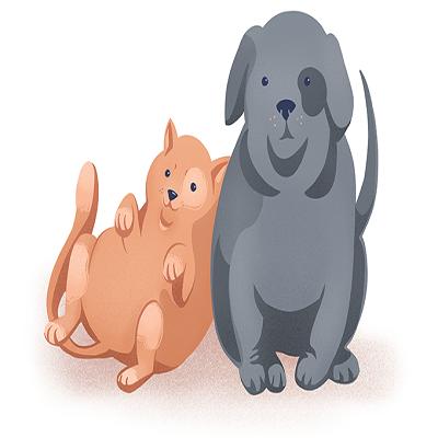 Como combater a obesidade de cães e gatos
