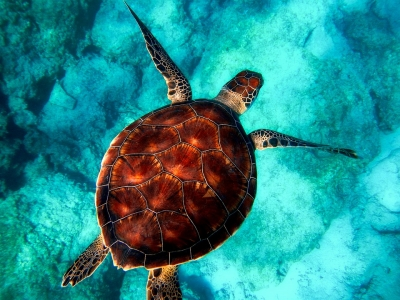 Cerca de 1 milhão de espécies estão em risco de extinçao