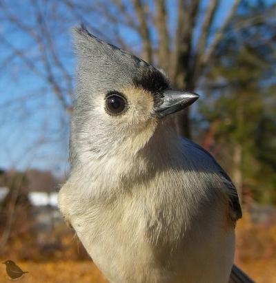 Mulher tira foto de todos os pássaros que visitam a casa dela, confira as melhor