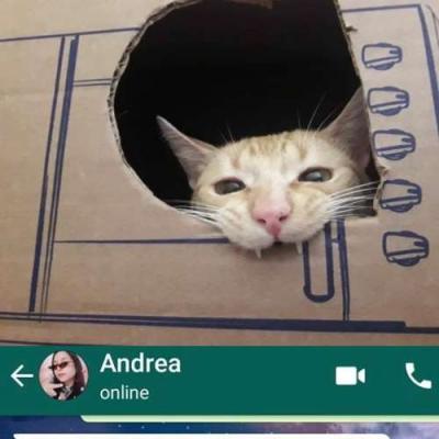 Webnamoro felino?