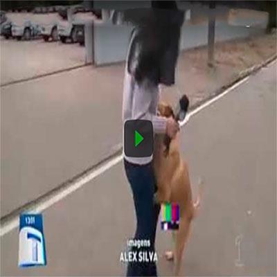 Cachorro ataca repórter durante reportagem ao vivo
