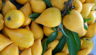 5 Benefícios da Fruta Canistel – Para Que Serve e Propriedades