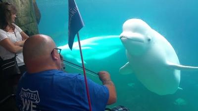 Beluga se encanta com violinista em aquário