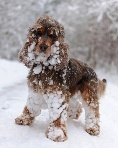 Animais experimentando a neve pela primeira vez