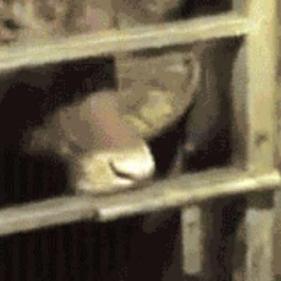 Abrindo a cela