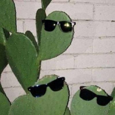 Cactus estilosos