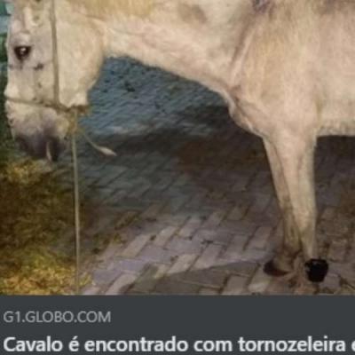 Até o cavalo