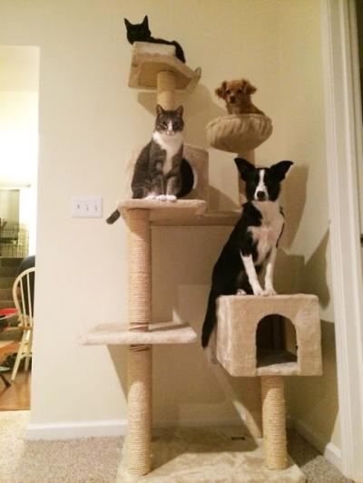 Cães que acham que são gatos