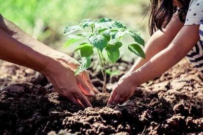 7 truques fáceis para cuidar das suas plantas