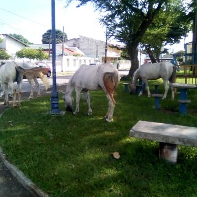 Logradouro dos cavalos