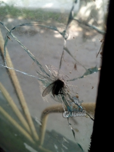 Essa mosca estava a 870 km/h
