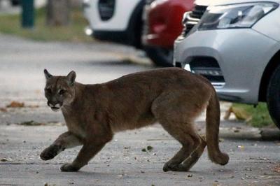 http://www.realworldfatos.blogspot.com/2020/04/animais-invadem-cidades-devido-co
