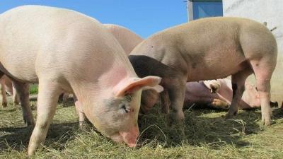 Brasil suspende importação de carne suína da Alemanha
