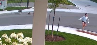 Vídeo mostra yorkshire enfrentando coiote para salvar tutora no Canadá