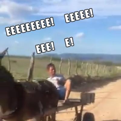 Se beber, não dirija um cavalo