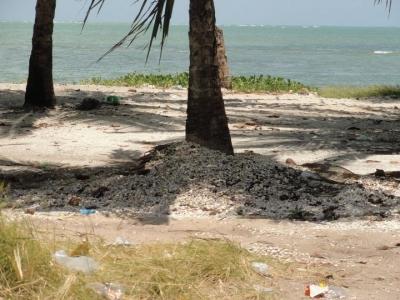 Cascas de mariscos na praia causam problemas ambientais