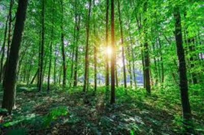 Plantar triliões de árvores pode anular as emissões de CO2