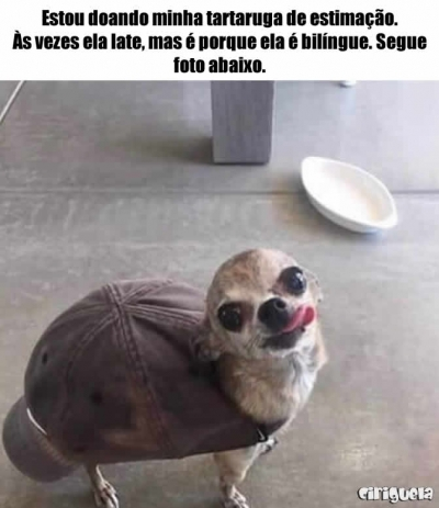 Doando tartaruga de estimação