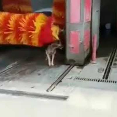 Um cachorrinho muito sagaz
