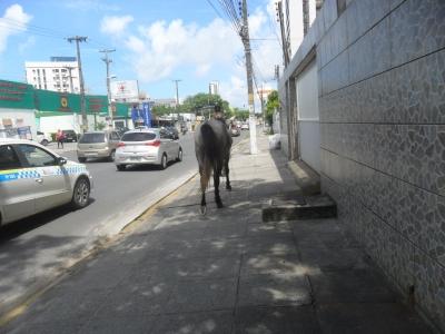 Cavalo passeando pela calçada