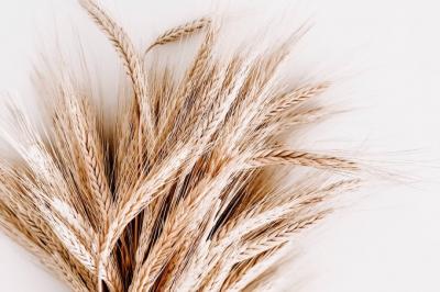 Dia do trigo: mitos e verdades