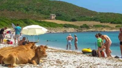 Ilha francesa fecha praias após vacas selvagens atacarem turistas