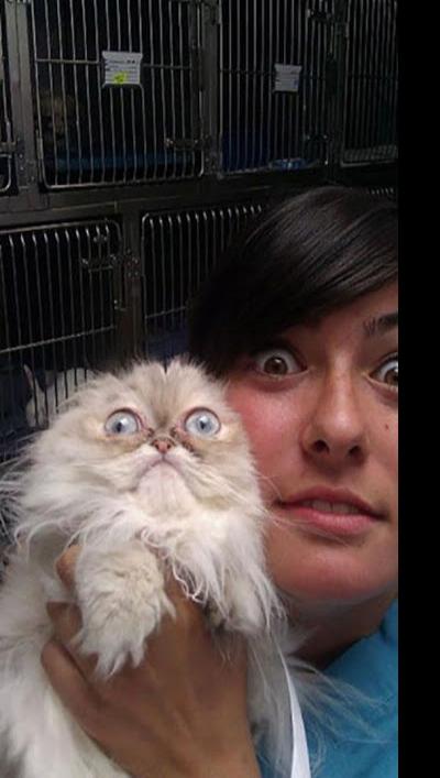 Fotos hilárias de animais que perceberam que estão no veterinário