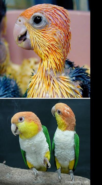 Aves antes e depois delas crescerem #2