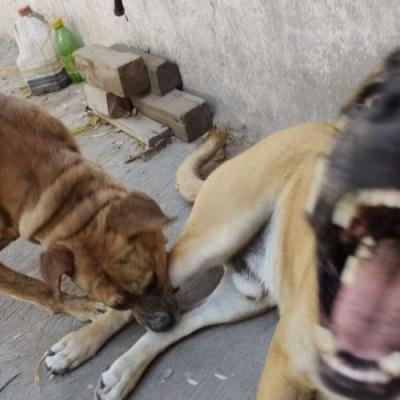 Cachorro grito absurdamente alto