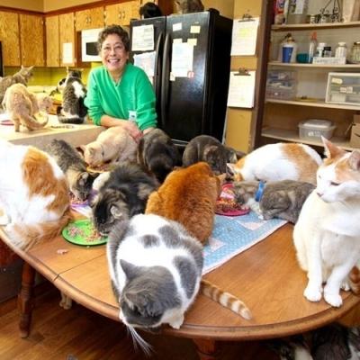 Conheça a mulher que mora com mais de 1.000 gatos em uma pequena casa