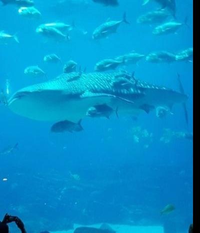 Georgia Aquarium (Atlanta): o maior aquário do mundo!