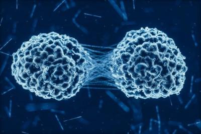 Cientistas estudam proteína que protege contra câncer, diabetes e fígado gorduro