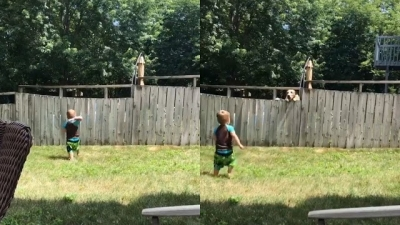 Garotinho brinca com cão do vizinho mesmo separados