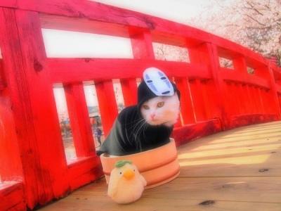 Entusiasta de cosplay transformar gatos em versões femininas de personagens de a