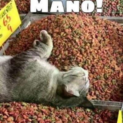 Um gato em um paraíso felino