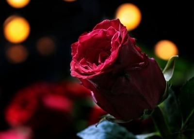 O Amor e a Flor