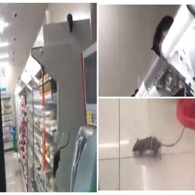 Vídeo mostra ratos fazendo a festa em supermercado e loja é fechada