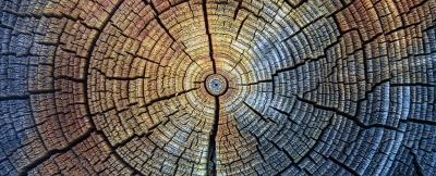 Anéis de árvores centenários revelam uma anomalia que começou no século 20