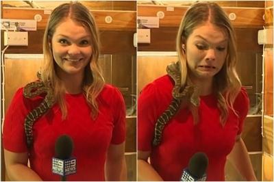 Cobra ataca microfone de repórter durante gravação