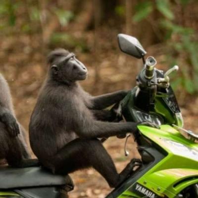 Medo de moto