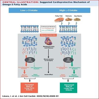 Alimentos ricos em ômega-3 melhoram recuperação após infarto